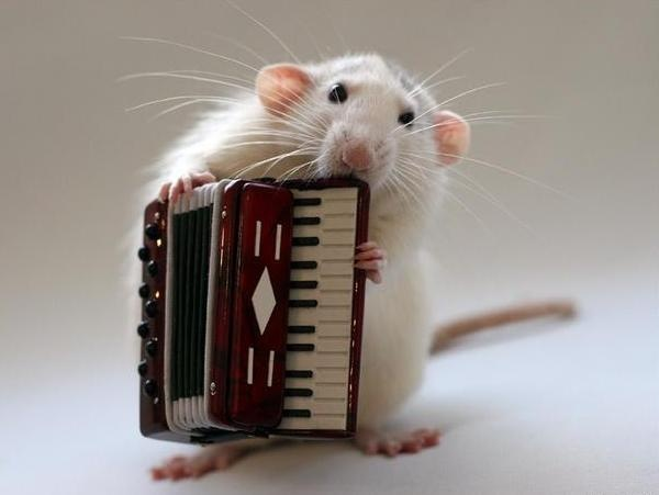 I saw this and thought it was so cute! I couldn't help but notice that the way the mouse is pl