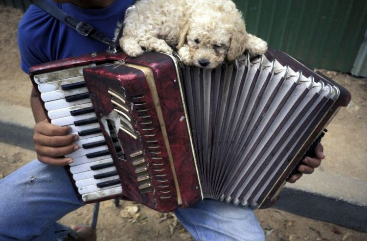 So adorable! This puppy reminds me of my cat who used to sit and walk across my piano keyboard whene