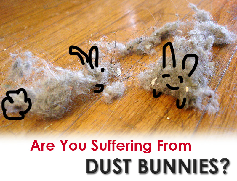Are You Suffering From Dust Bunnies Accordion Life
